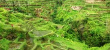 Bali, het Godeneiland