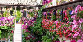 Cordoba Festival de patios