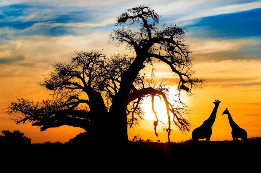 South-Africa-National-Park-Sunset