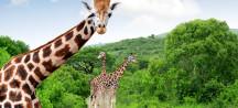 Kenia: 8 dagen safari